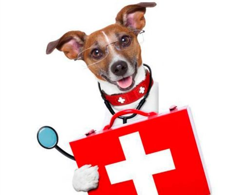 CVRS Policlinico Veterinario Roma Sud | Cane donatore dottore