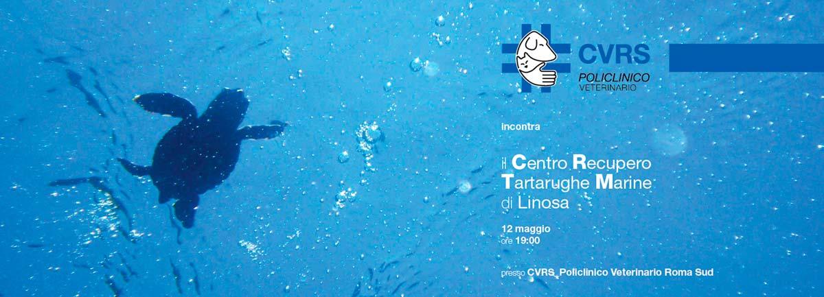 CVRS Policlinico Veterinario Roma Sud | Centro Di Recupero Tartarughe Marine Di Linosa