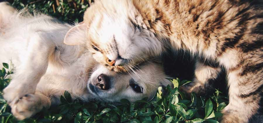 epilessia animale