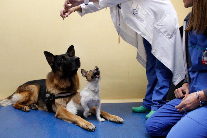 Cvrs Policlinico veterinario Roma Sud | animali e dottore