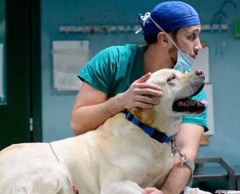 Policlinico veterinario Roma Sud formazione al CVRS