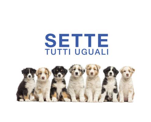 Policlinico veterinario Roma Sud 7 tutti uguali