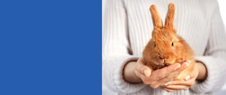 conigli prevenzione