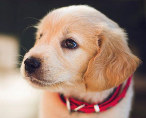 veterinario roma cura animali