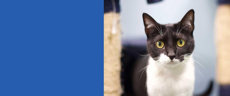 Prevenzione delle malattie infettive del gatto - Campagna Settembre