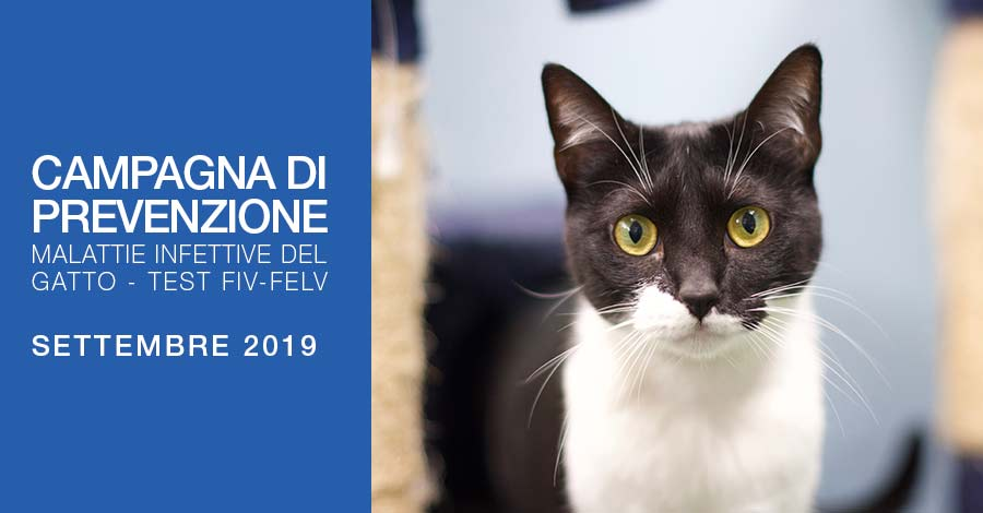 Malattie Infettive del Gatto - Campagna Settembre 2019