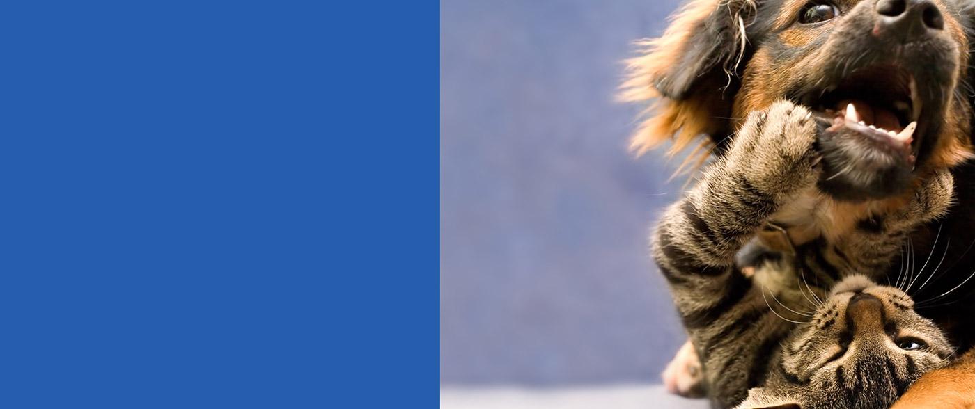 Check up salute Prevenzione animale