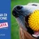 prevenzione dentale animali