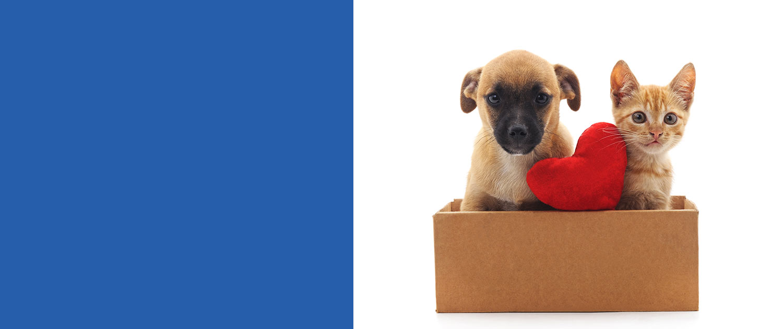 Offerta pacchetto veterinario cuccioli