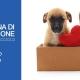 vaccini e prevenzione cuccioli