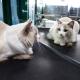 medicina veterinaria felina gatti