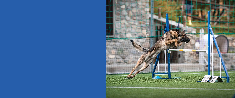 medicina sportiva animali